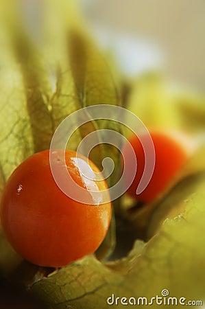 Stachelbeere (Physalis)