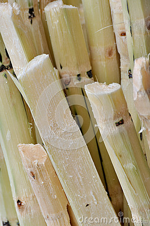 Stack of chipped sugar cane