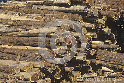 A stack of cut logs