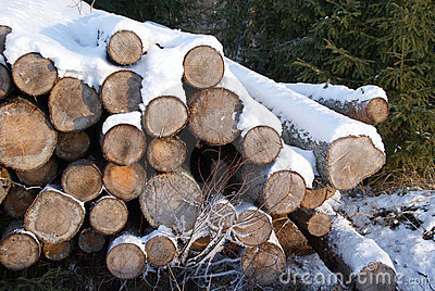 Stack of Firewood in Winter Snow