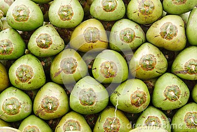 Stack of fresh green coconuts