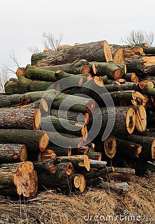 Stack of Lumber Tree Wood
