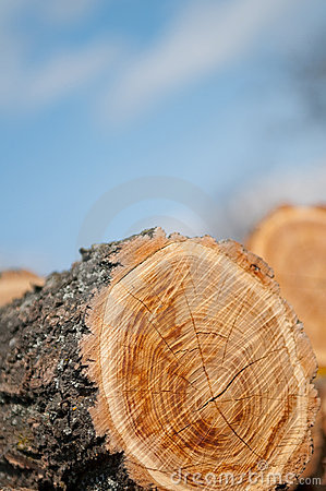 Free Stack Of Wood Royalty Free Stock Photos - 13842498