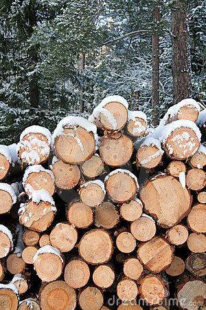 Stack of Pine Logs in Winter Snow