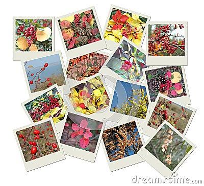 Stack of polaroid photo shots with autumn tints