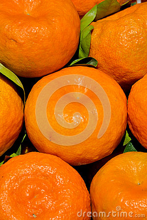 Citrus as featured color and pattern