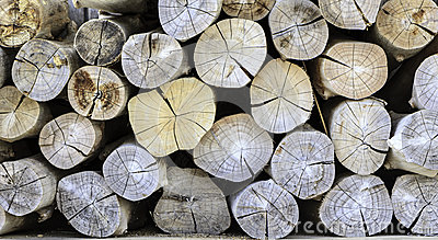 Stack wood of pine