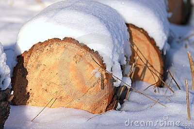 Stacked firewood in winter snow