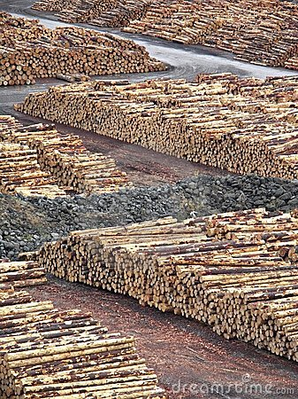 Free Stacked Logs Stock Photography - 2292632