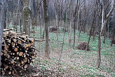 Stacked logs and trees