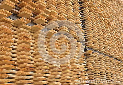 Stacked Pine Wood Timber Drying