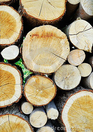 Free Stacked Timber Logs Stock Image - 5090371