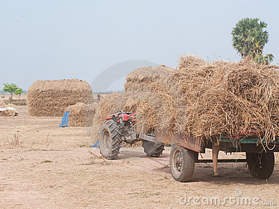Stacks of hay in Cambodia