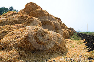 Stacks of straw on the field