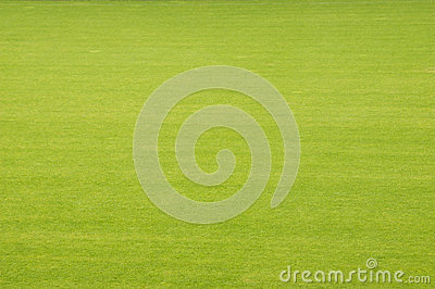 Stadium turf