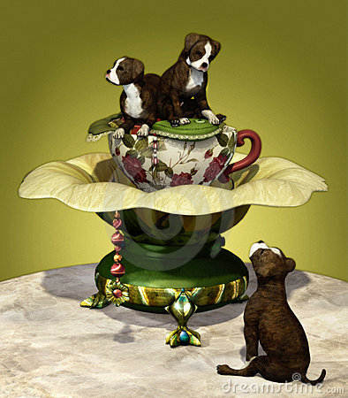 Staffordshire Puppies