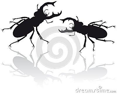 Stag beetle illustration