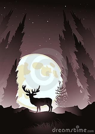 Stag by Moonlight
