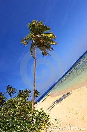 STAGGERING BEACH WITH PALM TREES