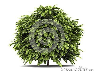 灌木staghorn sumac白色