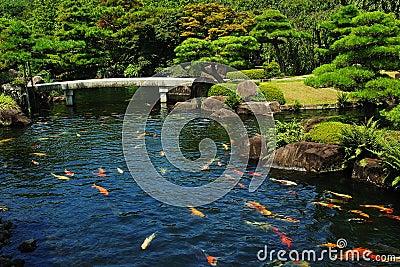 Stagno di pesci al giardino giapponese fotografie stock for Pesci da stagno