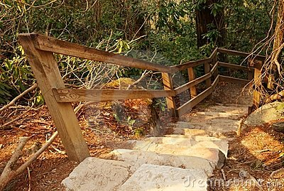 Stair steps in nature forest