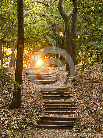 Stairs through forest
