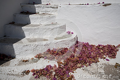 Stairs and petal