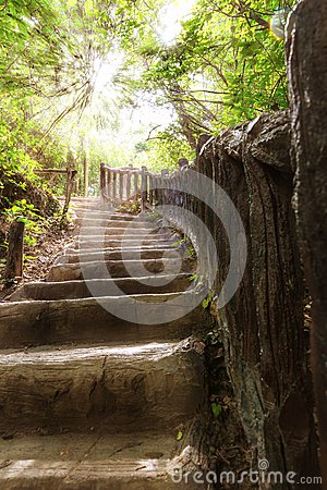 Stairs in tropical forest