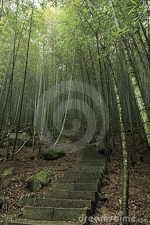 Stairs way to bamboo forests