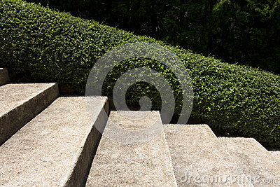 Stairway in a park