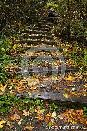 Free Stairway Through The Trees Royalty Free Stock Photos - 7865638