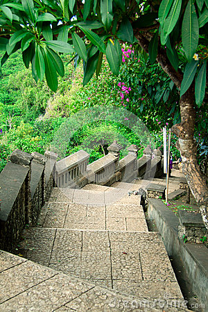 Stairway to jungle