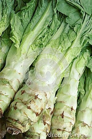 Stalk lettuce