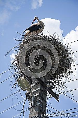 Stalk in nest