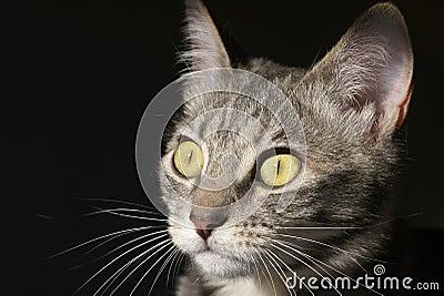 Stalking kitty cat
