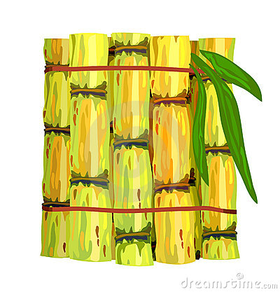 Stalks of sugar cane.