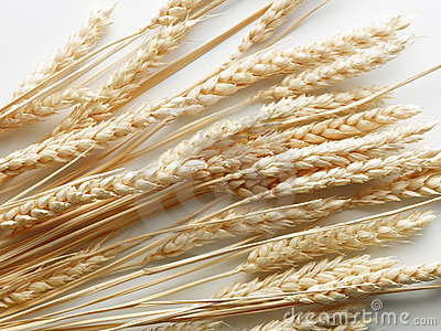 Stalks of wheat