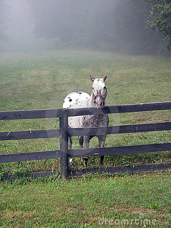 Stallion against fence