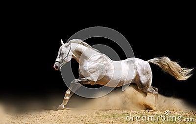 Stallion, der sich vorwärts bewegt