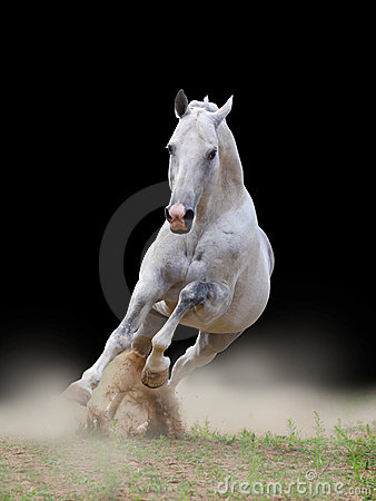 Stallion in dust