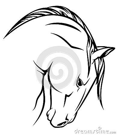 Stallion head