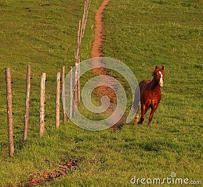 Stallion Runs Downhill