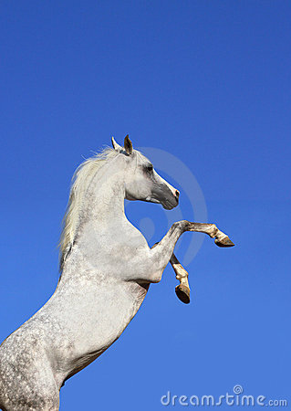 Stallion and sky