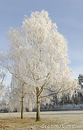 Free Stanborough Winter Trees Royalty Free Stock Image - 28317096