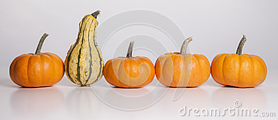 The Stand Out Gourd