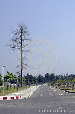 Stand tree beside a road