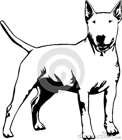 Standing bull terrier