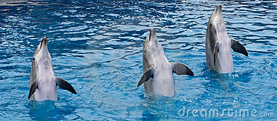 Standing dolphins