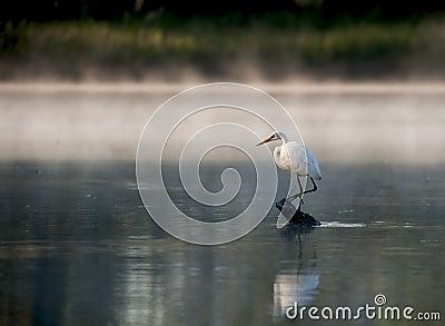Standing för heronjournalflod